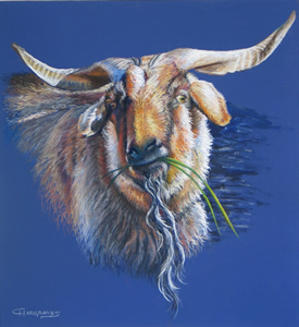 Pastel Portrait of a Goat