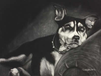Pastel on Black velvet- Pet Dog portrait